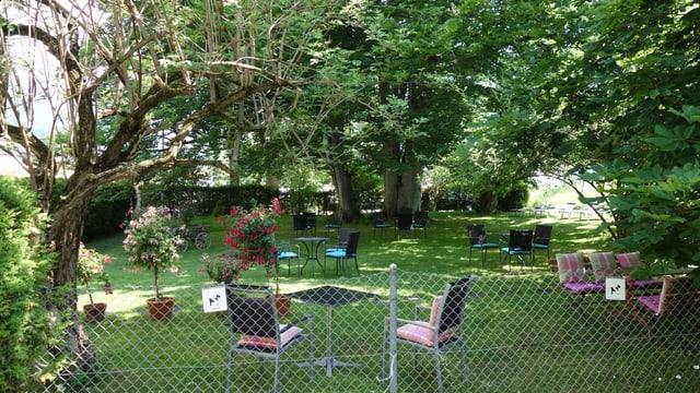 Il chastagner selvadi ad Andeer è ina da las pli veglias plantas en vischnanca.