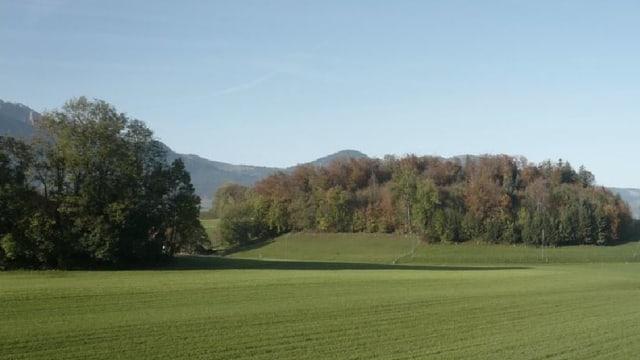 Ein Feld mit Wald im Hintergrund.