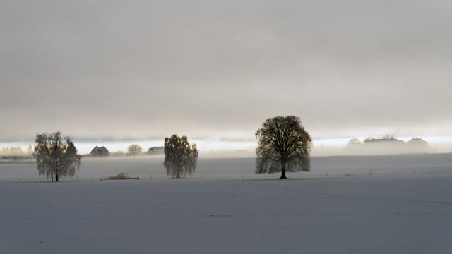 Blick über ein verschneites Feld in Konolfingen, knapp unter der Nebelschicht. Am Horizont ein kleiner Lichtstreifen.