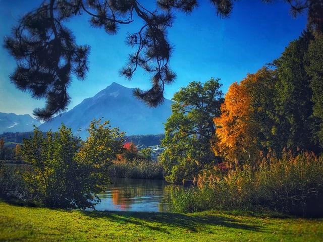 Gelber Baum an See