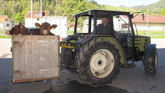 Zwei Kalber werden in einer Holzbox per Traktor angeliefert.