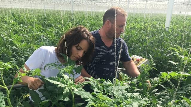 Manuel De Sousa verpasst Mona Vetsch eine Schnellbleiche bei den Tomaten.