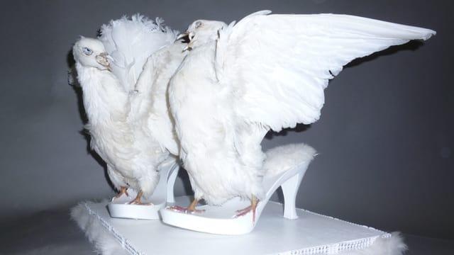 Schuhe, die aus toten Tauben gefertigt wurden