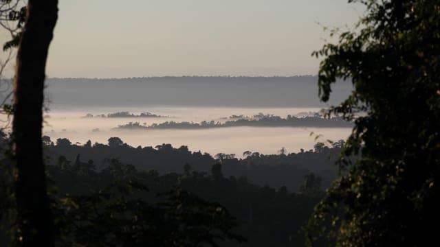 Video «Der Amazonas» abspielen