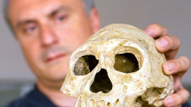 Schädel Homo erectus