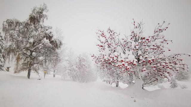 Verschneiter Baumbestand im Val Müstair.