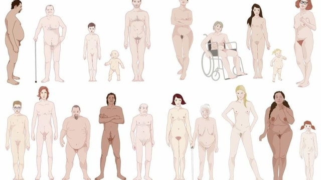 Zeichnung von verschiedenen Männer- und Frauenkörpern