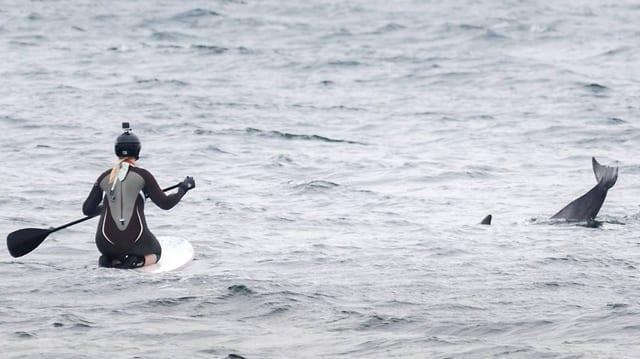 Delfin-Schwanzflosse neben Frau auf Standup-Paddelboard
