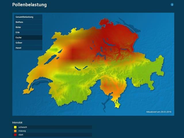 Eine eingefärbte Schweizerkarte. In der Ostschweiz und im Tessin besteht bereits eine gewisse Eschenpollenbelastung.
