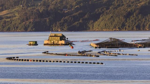 Aquakultur nahe einer Insel