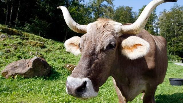 2018: Sonderausstellung zur Kuh