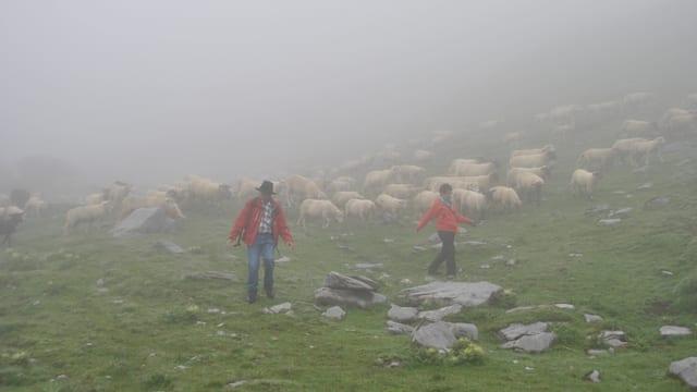 Viel Nebel: Schäfer und Schafe habe einander trotzdem gefunden.