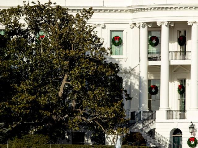 Magnolie am rechten Rand des Weissen Hauses