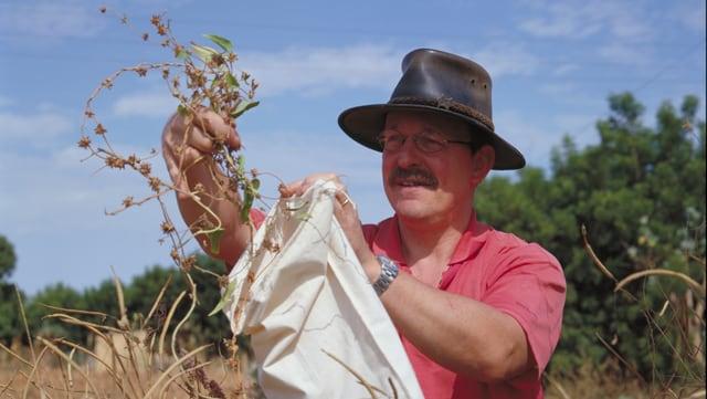 Ein Mann steckt eine vertrocknete Winden-Pflanze in einen weissen Sack.