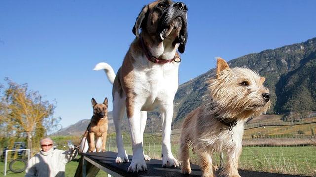 Hundekurs Obligatorium im Kanton Glarus