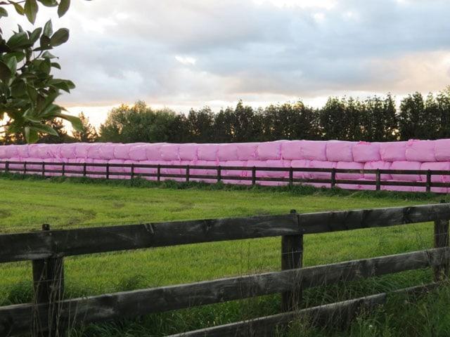 Eine Mauer aus pinken Heuballen in einer grünen Landschaft.