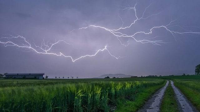 Blitze über Feld