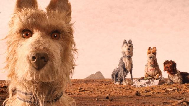 Hunde in der Wüste.