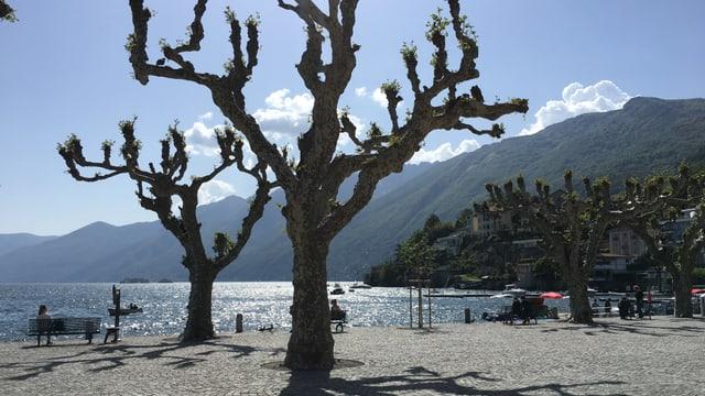 Sonnige Strandpromendade in Ascona.