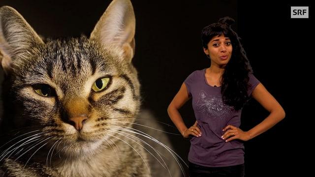 Video «Wie wurde die Katze zum Haustier? | Clip und klar! - Dein Erklärvideo» abspielen