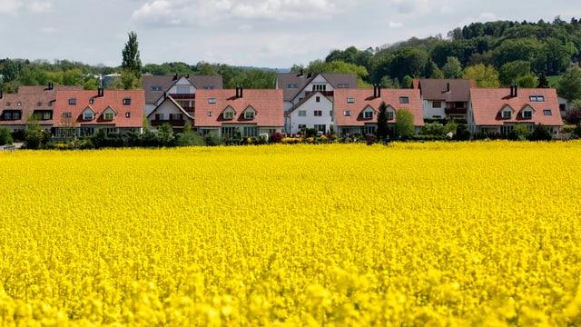 Einfamilienhäuser vor Rapsfeld