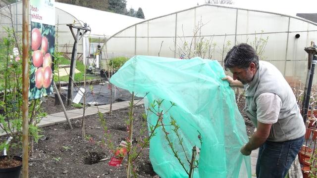 L'ortulan Pascal Keller cuvra ina planta pitschna da persic che flurescha gia cun in vlies.