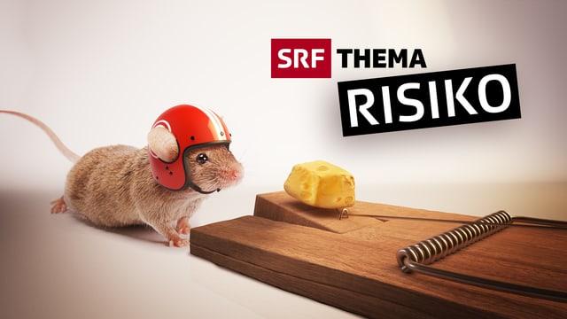 Eine Maus mit Helm schnuppert an einem Käse, der auf einer Mäusefalle liegt (Bildmontage)