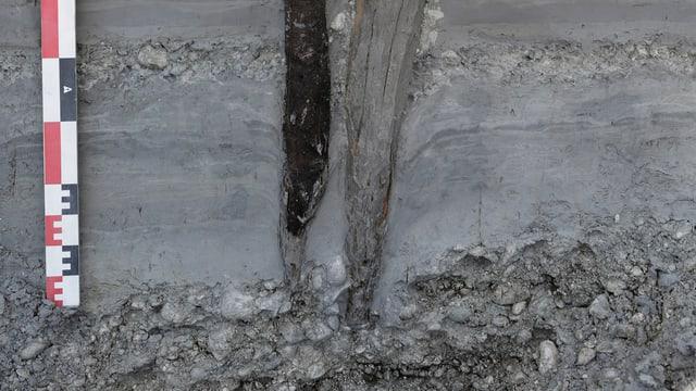 Ein Querschnitt des Untergrunds zeigt zwei gut erhaltene Hauspfähle aus Holz. Daneben steht ein Meter, der die Grössenverhältnisse deutlich macht.
