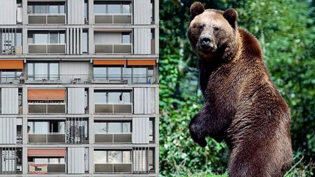 Montage: Hochhaus und Bär nebeneinander.