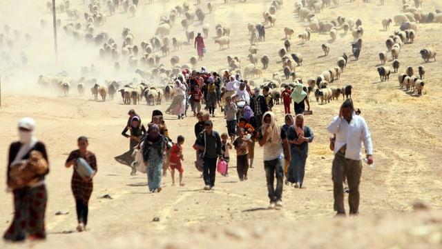 Jesiden im Irak auf der Flucht vor der Terrormiliz IS (Archivbild)