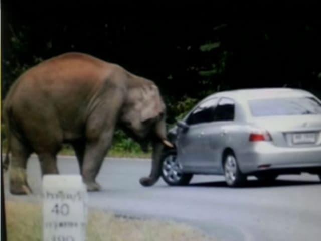 Der Elefant begutachtet ein Auto.