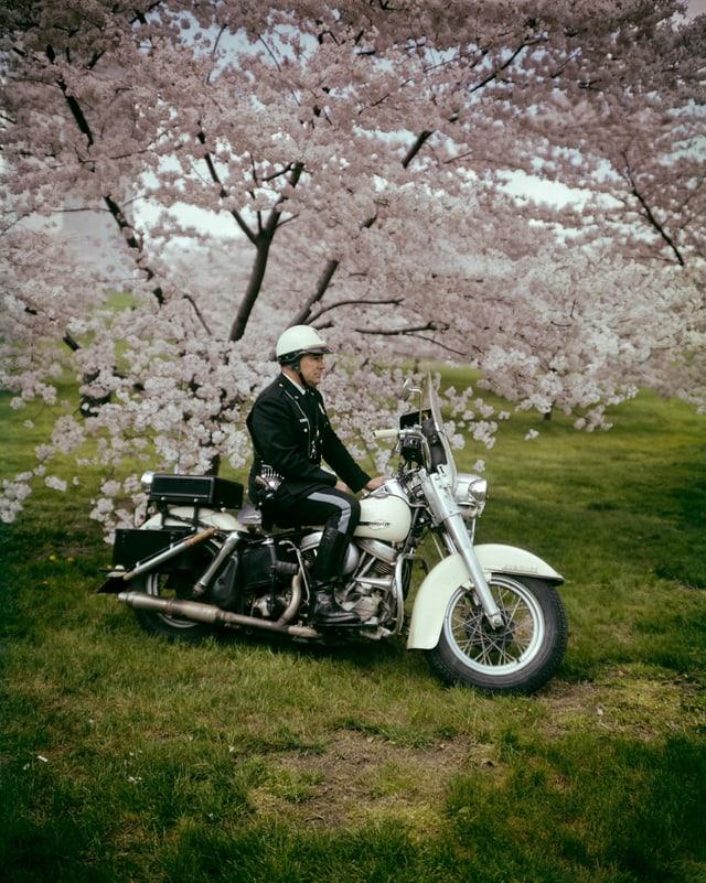 Ein Polizisit auf seinem Motorrad auf einer Wiese unter einem rosa blühenden Baum.