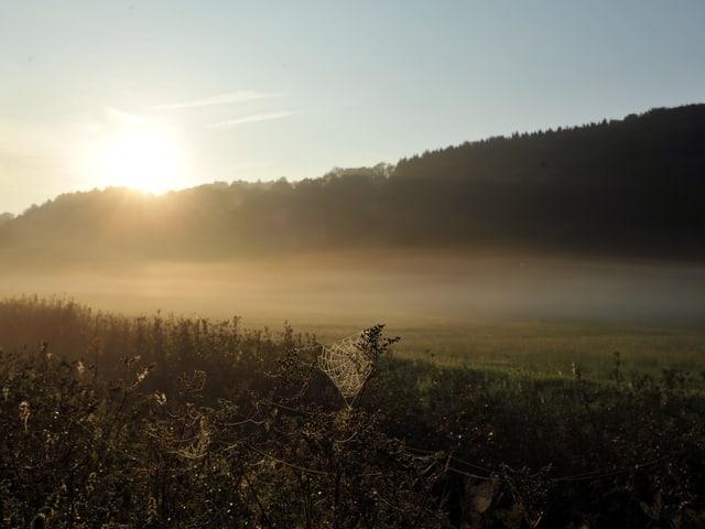 Sonnenaufgang, Nebel, Spinnennetz