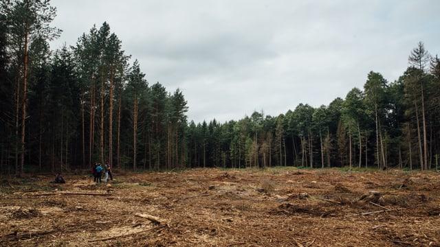 Gerodete Waldfläche.