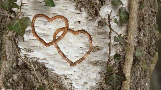 Geschnitze Herzen in Baumrinde