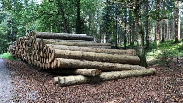 Holzstämme ohne Rinde liegen in einem Wald bereit.