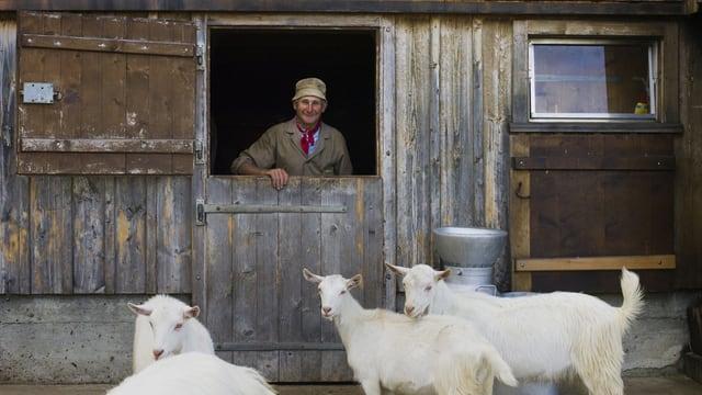 Ein Bauer in einem Stall, vor dem weisse Ziegen stehen.