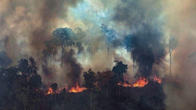 Der Amazonas brennt