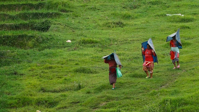 Drei Bauern auf einer Wiese mit Regenschutz überm Kopf.