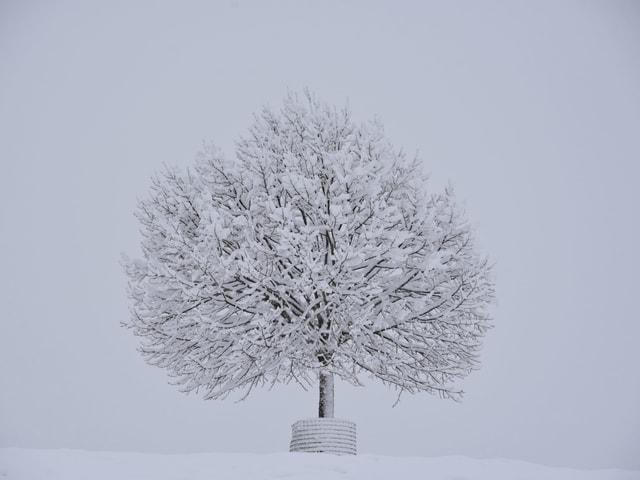 Eingeschneiter Baum auf einer Anhöhe.