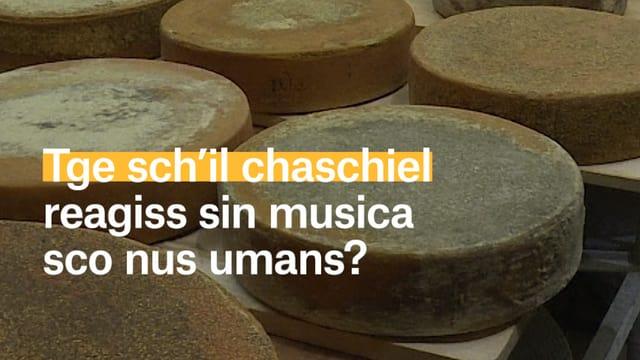 Laschar ir video «Auda chaschiel musica?»