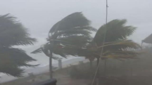 Palmen biegen sich im Sturm