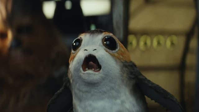 Kleines Tier mit grossen Augen