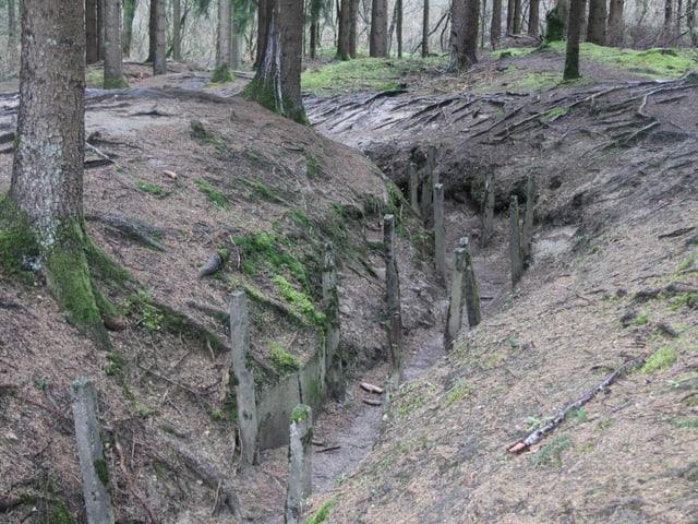 Überreste eines Schützengrabens in einem Wald
