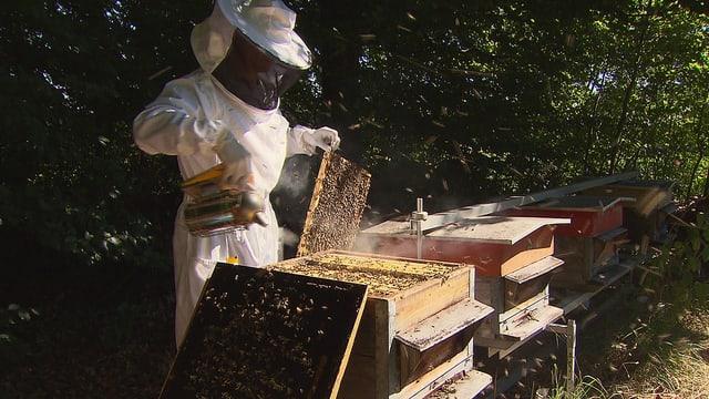 Pestizide – unheimlich wirksam: Das Leiden der Bienen (2/3)