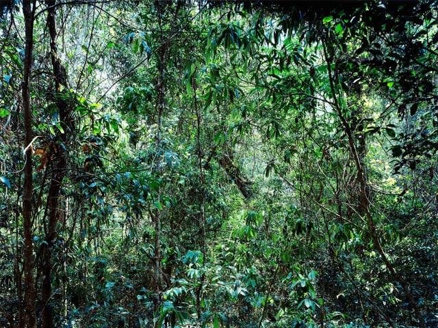 Dschungel, viel Grün, kaum Tageslicht.