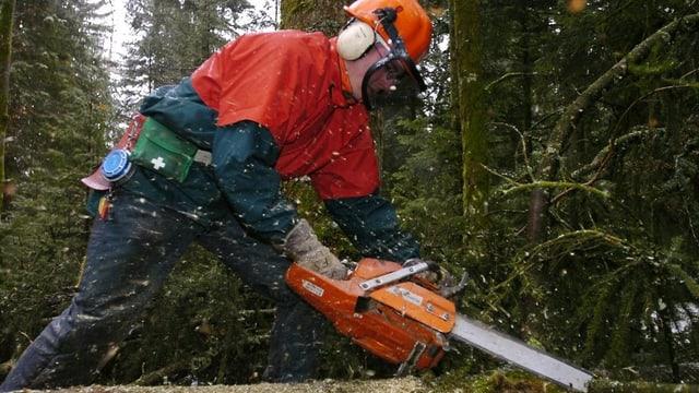 Förster fällt einen Baum