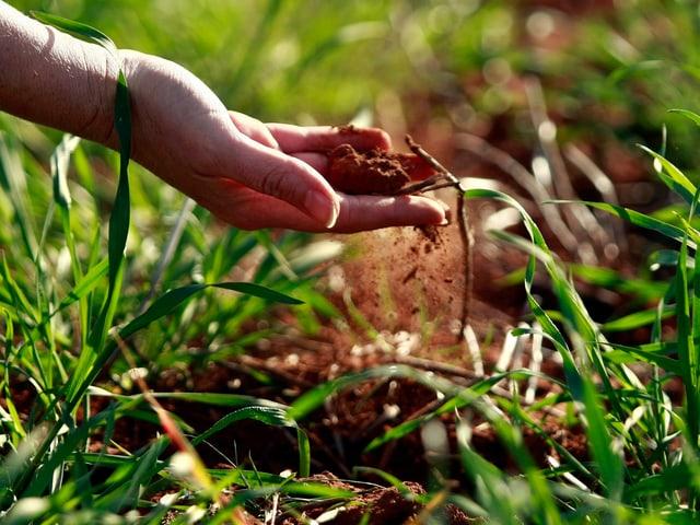 trockene Erde liegt in einer Hand