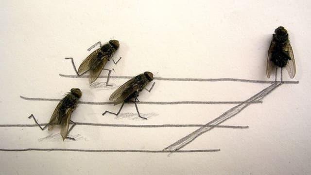 Tote Insekten vom Sims nehmen, Zeichnung drum machen,