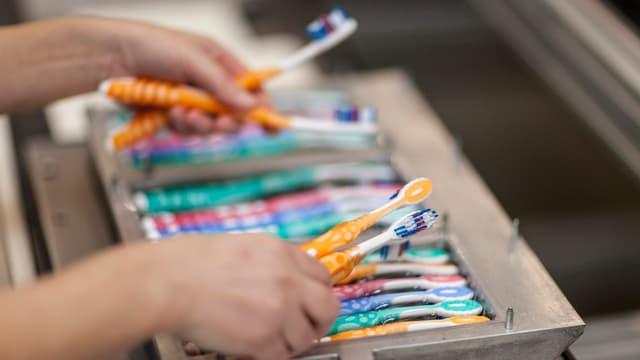 Viele Zahnbürten in einem Behälter. Zwei Hände halten zudem einige Zahnbürsten.